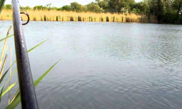 Pescuitul crapului pe Dunare si in Delta Dunarii